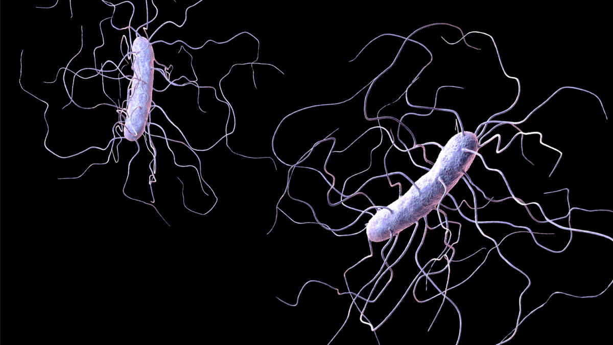 Clostridium difficile bacteria isolated on black background, 3D illustration. Bacteria which cause pseudomembraneous colitis and are associated with nosocomial antibiotic resistance - Illustration