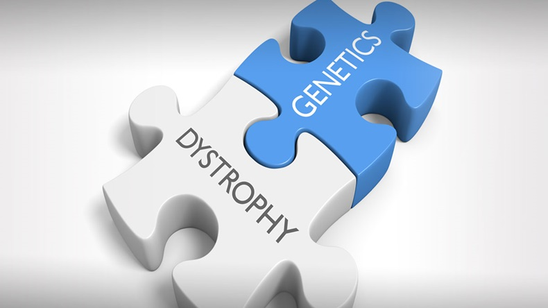 Link between genetics and various dystrophy disorders