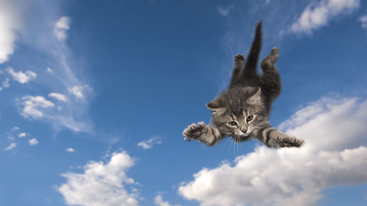 Young kitten jumps and glide through the air