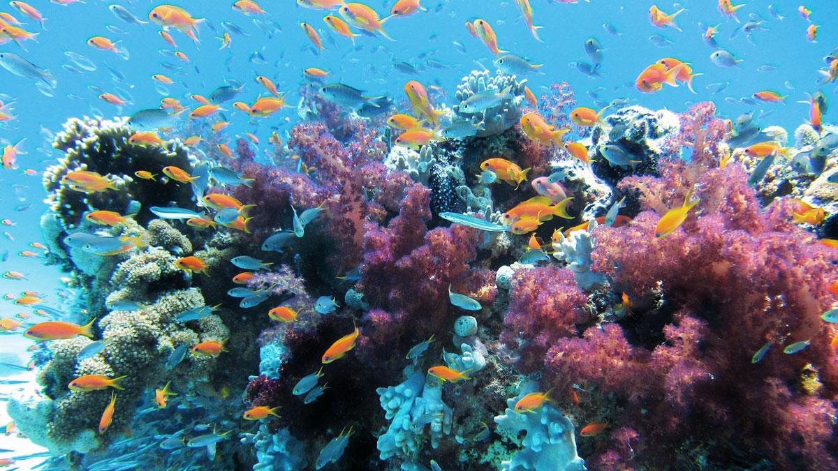Hawaii Coral Reef